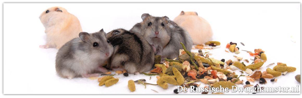 witte-molen-hamstertjes