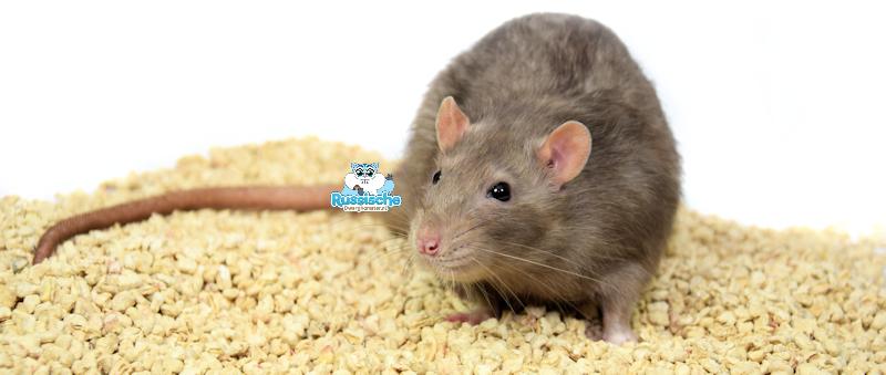 corbo bodembedekking voor ratten