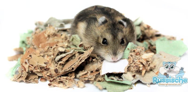 hamster dwerghamster in bodembedekking