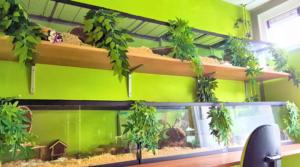 De groene hamsterkamer waar alle hamstertjes wonen